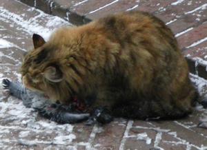 Eine Katze frisst in der nördlichsten Millionenstadt der Welt eine Taube. Wir dachten uns, das passt.